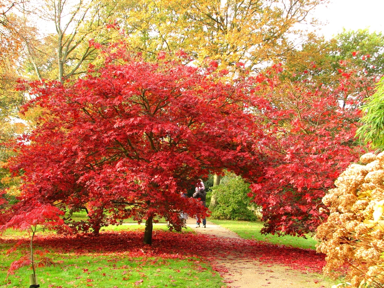 dunham massey altrincham cheshire wa14 4sj u2013 national garden scheme