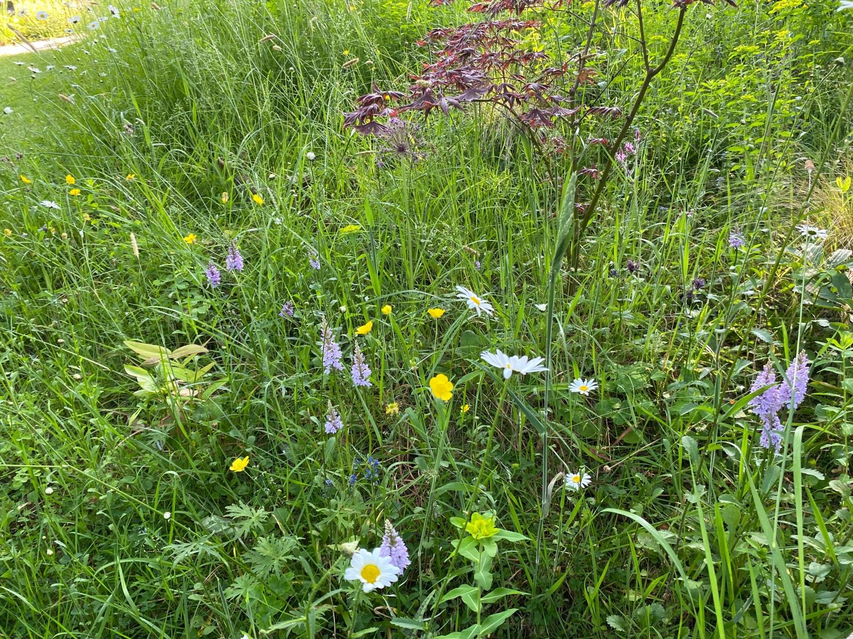 21 Refreshing Redneck Recipes And Camping Food Ideas: 21 Chestnut Road, Brockenhurst, Hampshire, SO42 7RF