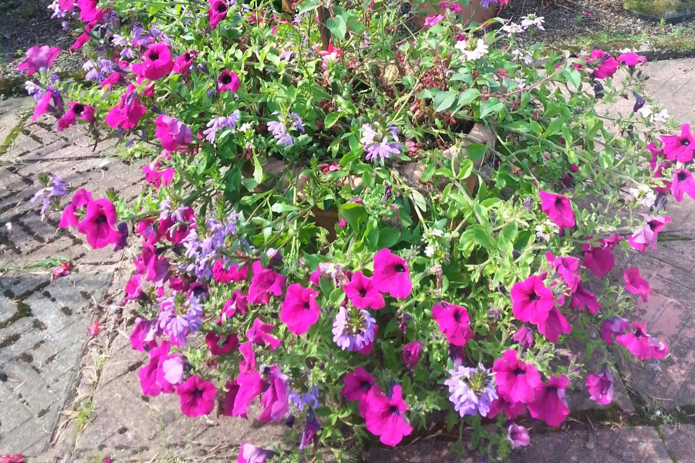 Flower Basket Whitehaven Uk : Berriedale whitehaven cumbria ca tn national