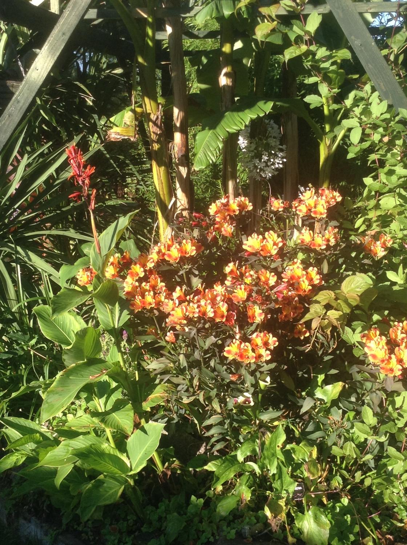 Honeytrees Tropical Garden, Bottesford, Nottinghamshire, NG13 0EG ...