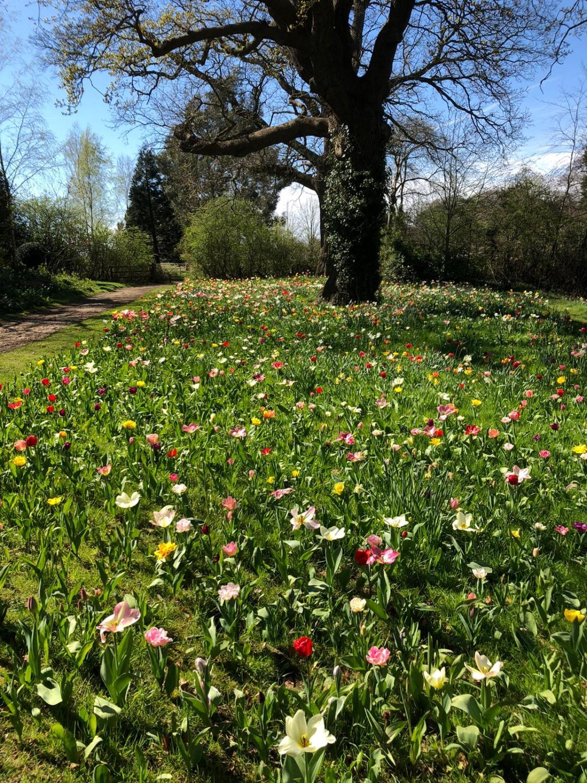 Dunsborough Park Ripley Surrey Gu23 6al National